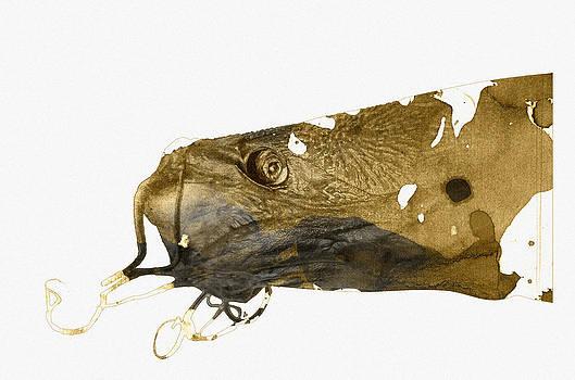 Catfish by Vladas Orzekauskas