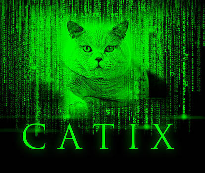 Waldek Dabrowski - CATIX