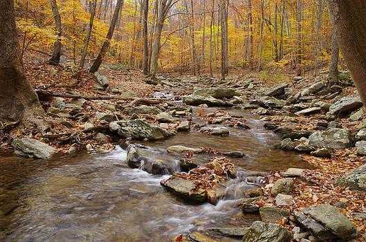 Catoctin Stream by Robert Geary