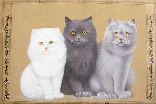 Cats by Bharat
