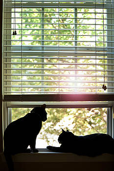 Cats Enjoying Open Window by Sharon Dominick