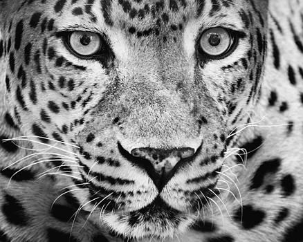 Cat's Eye 2 by Robert Hainer