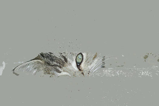 Joe Bledsoe - Cats eye