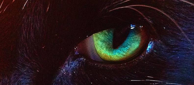 Cats eye by Michelle Hynes