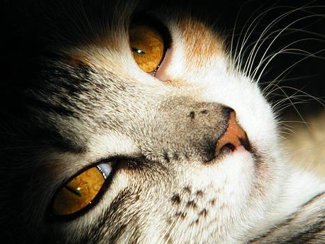 Cats eyes by Matthew Kay