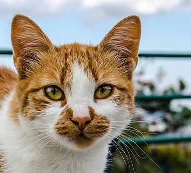 Cats eyes. by Slavica Koceva
