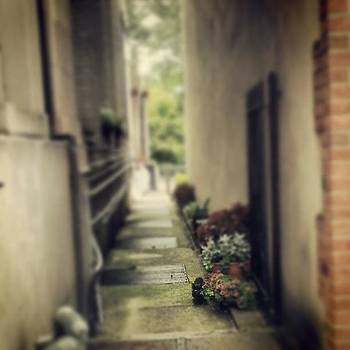 #cats #kittens #flowers #alley by Philip Grant