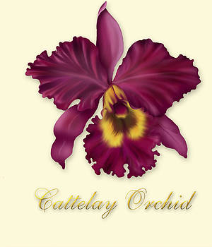 David Griffith - Cattelay Orchid