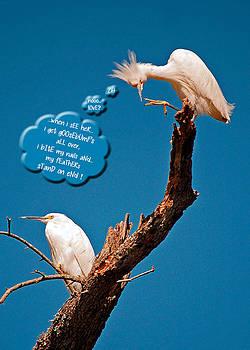 Donna Proctor - Cattle Egret Goosebumps