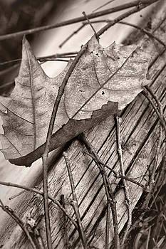 Nikolyn McDonald - Caught #2 - Dried Leaf - Sepia