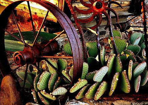 Caught in a Cactus Patch-SOLD by Antonia Citrino