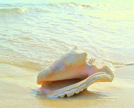 Cayman Conch #3 by Stephen Bartholomew