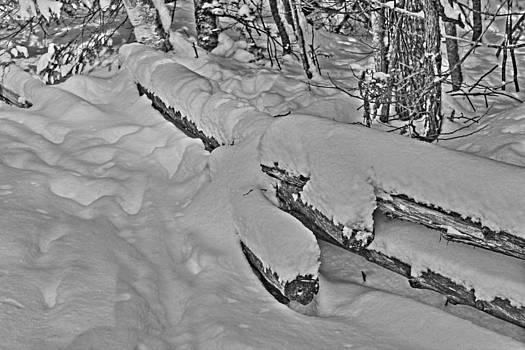 Cedar Snow Fence by Deanna King