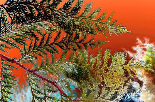 Cedar Canvas by Gwyn Newcombe