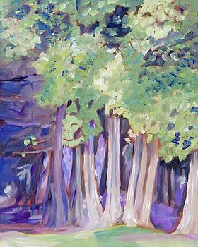 Cedars At Twilight by Sarah Sheffield