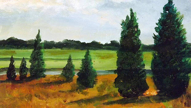 Cedars by Robert Harvey
