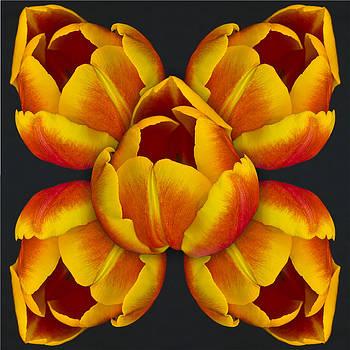Celebration of Tulips by Nancy Myer