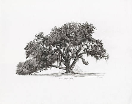 Cellon Oak Florida Champion Live Oak by Richard Devine