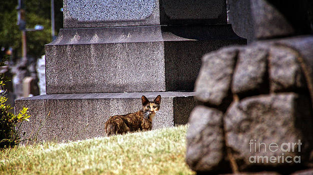 Cemetery Cat by Mark Thomas