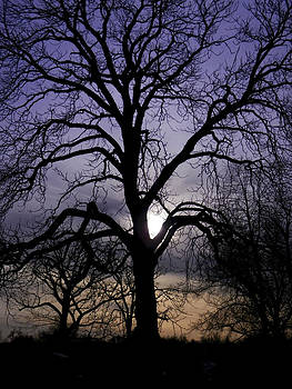 Cemetery Tree  by Kelly E Schultz