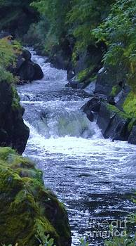 Cenarth Falls by John Williams