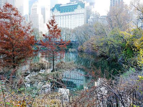 Central Park Fall Foliage 2 by Frank McAdam