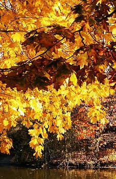 Central Park Fall Foliage 3 by Frank McAdam