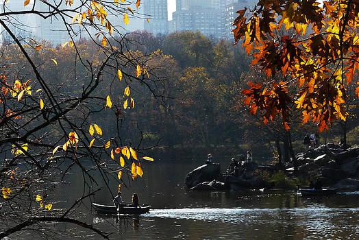 Central Park Fall Foliage 4 by Frank McAdam
