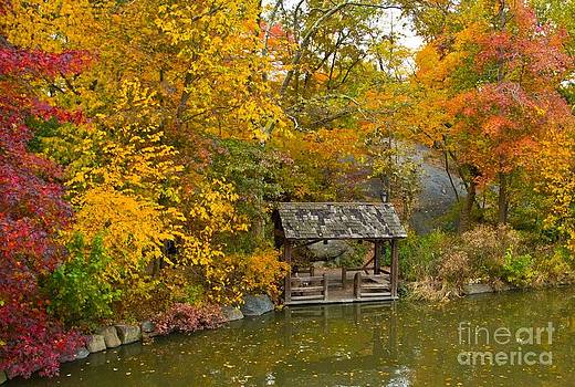 Central Park in the Fall by Kim Quintano
