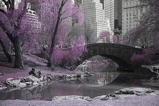 Central Park-Pretty in Pink by Denise Rafkind