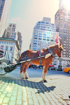 Emily Stauring - Central Park Ride