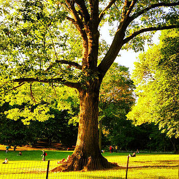 Central Park Tree by Kathleen Anderle