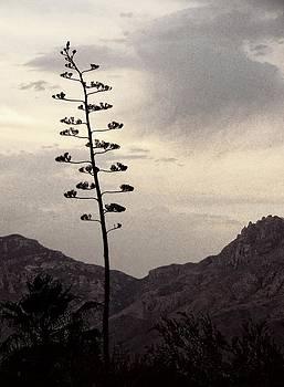 Regina Arnold - Century Plant