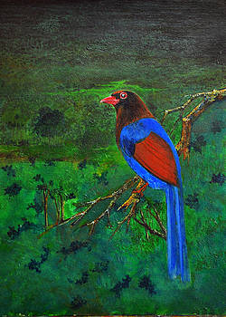 Ceylon Blue Magpie by Samantha H Wellallage