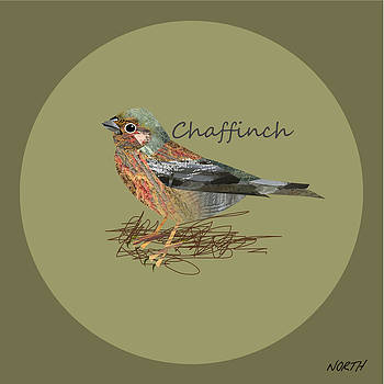 Chaffinch by Kenneth North