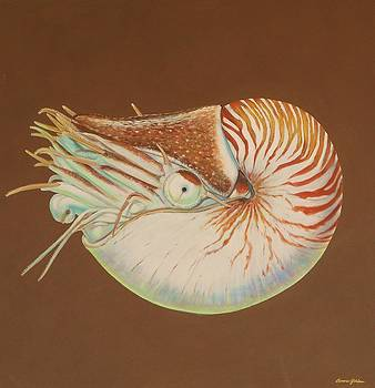 Chambered Nautilus by Bonnie Golden