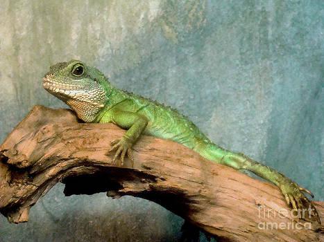 Chameleon by Eva Kato