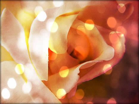 Champagne Rose  by Deborah Knolle