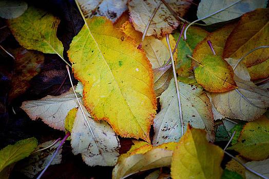 Michelle Wrighton - Change of Season