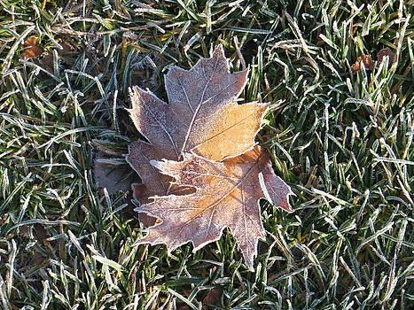 Changing Seasons by Pamela Turner