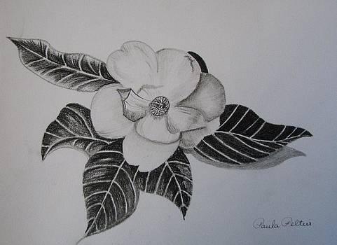 Charcoal Magnolia I by Paula Peltier