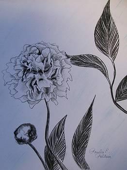 Charcoal Peony I by Paula Peltier