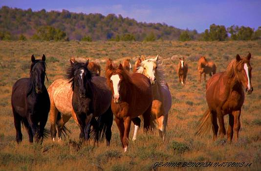 Charge Of The Mustangs  by Jeanne  Bencich-Nations