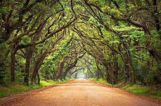 Charleston SC Edisto Island - Botany Bay Road by Dave Allen