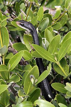 Doris Potter - Charmed by a snake