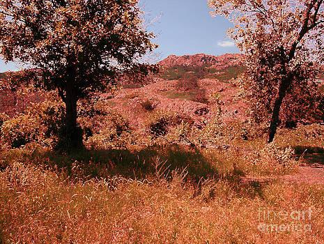 Charons Garden Wilderness by Mickey Harkins