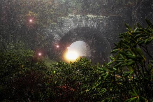 Chasing Light by Daniel  Gundlach