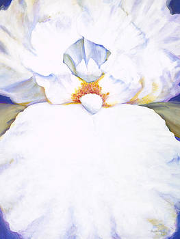 Chastity White Iris by Jerome Lawrence