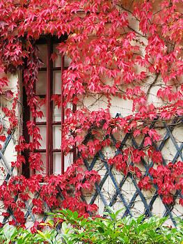 Randi Kuhne - Chateau Chenonceau Vines on Wall Image Three