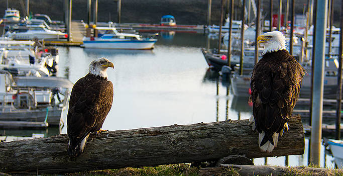 Debra  Miller - Chatty Bald Eagles Homer Alaska